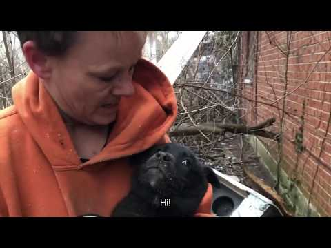 Crawling UNDER a house to save 3 little fluffy puppies - Stray Rescue of St.Louis