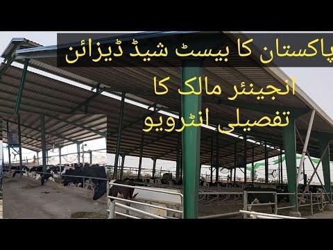 Best Dairy Farm Shed Design Dairy Farm In Pakistan Dairy Business In Pakistan Urdu Hindi