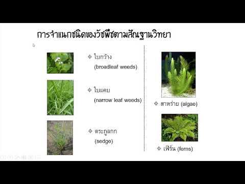 บรรยายการจัดการแปลงปลูก หัวข้อ วัชพืช