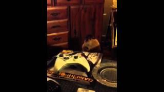 Jake the dog singing!!