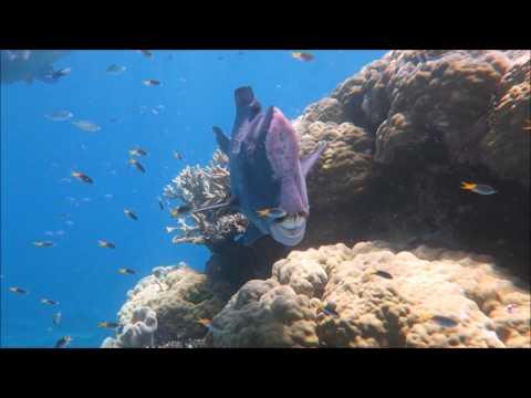 Flynn Reef Field Trip