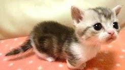 Vauva eläimet - söpö eläin videoita. Kokoaminen   Uusi HD