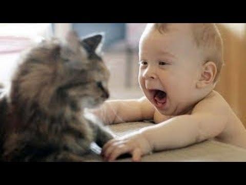 Los bebés riéndose histéricamente en Compilación Gatos 2014 [NEW HD]