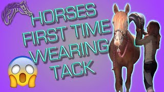 YOUNG HORSE TRAINING|| HOW TO INTRODUCE TACK || TACKING UP A HORSE FOR THE FIRST TIME