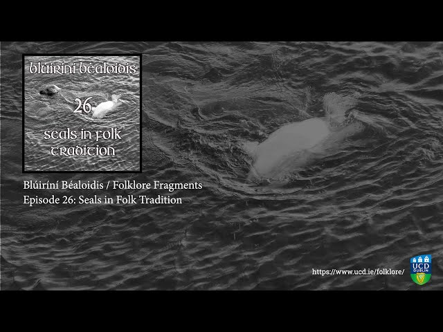 Folklore Fragments - Episode 26: Seals In Folk Tradition