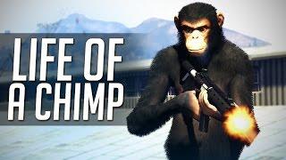 """GTA 5 Mods: """"Life of a Chimp!"""" (GTA V Movie)"""