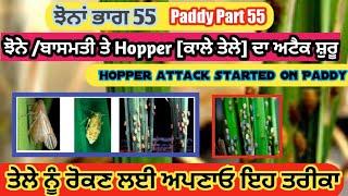 Risk of Rice plant hopper due to Favourable temprature(ਝੋਨੇ ਤੇ ਹਾਪਰ ਦਾ ਹਮਲਾ ਸ਼ੁਰੂ ਹੋਣ ਜਾ ਰਿਹਾ) gill