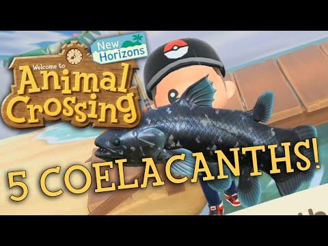 5 Coelacanth In 1 HOUR!   Animal Crossing: New Horizons