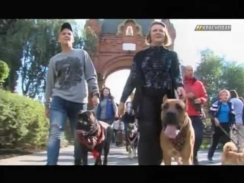 На ул. Красной в Краснодаре прошел парад домашних животных