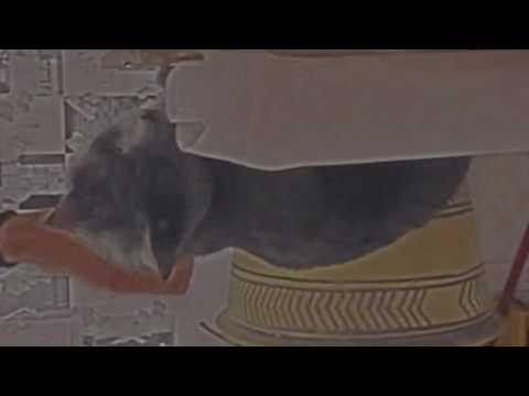 "Louis Baydala - ""Air Field Hare"""