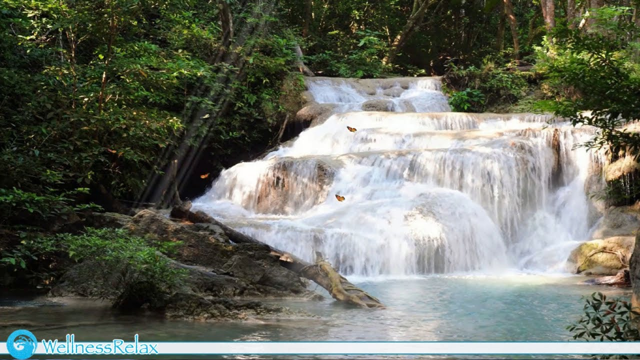 2 Hours Forest, Waterfall, River, Birds & Nature Sounds for Relaxation