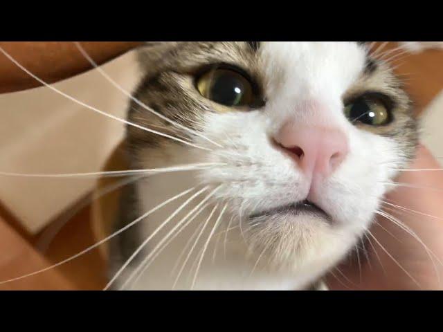 お母さんが喜ぶツボを知っている猫