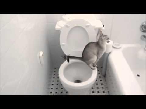 Почему часто гоняет в туалет по маленькому