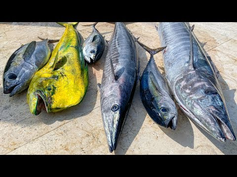 Tuna, Dolphin, Wahoo- Catch Clean Cook-  EPIC Kung Pao Wahoo Recipe!