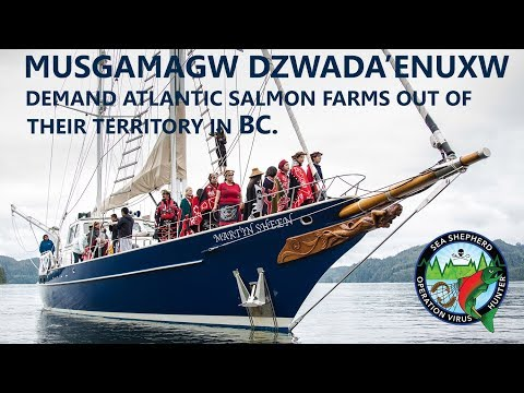 Musgamagw Dzwada'enuxw demand Atlantic Salmon Farms out of their territory in BC