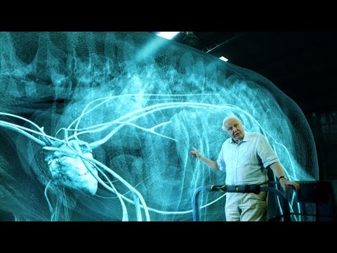 The heart of a titanosaur - Attenborough and the Giant Dinosaur: Preview - BBC One