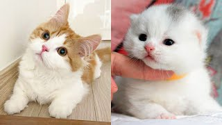 Baby Cats  Cute and Funny Cat Videos Compilation  #1   #babycat #Wepie