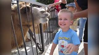 Top 10 FUNNIEST BABIES AND KIDS REACTION TO ANIMALS AT ZOO |Funny Babies and Pets