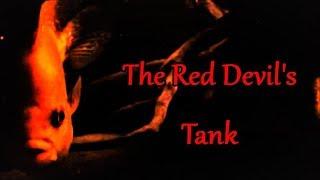 Red Devil Cichlid Care & Tank Set up Guide