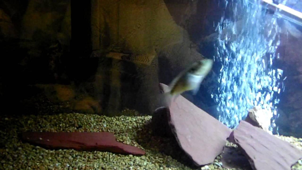 Fish aquarium white spots - White Spots On My Fish Tank
