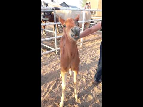Maranatha The Talking Horse - HILARIOUS!!!