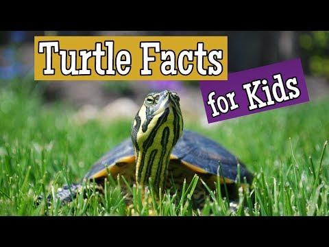 Turtle Facts For Kids