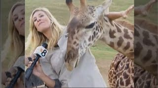 Watch Frisky Giraffe Distract News Reporter During Live Report