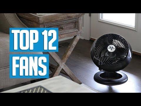 Best Fans 2019   TOP 12 Fan 🌟