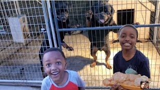 Raw feeding with the kids