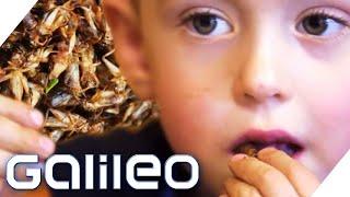 Junge isst Insekten | Galileo