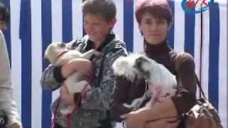 Выставка собак в солигорске