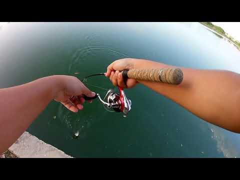 Memancing Ikan Talapia ( Sembat ) | Ultralight Fishing