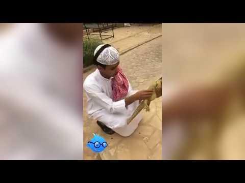 Arabische Idioten .. Lustige Kompilation