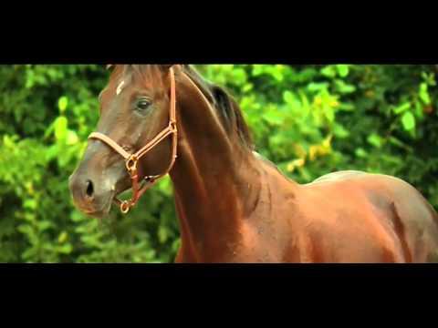 The Colt Challenge  HorseLover224  Wattpad Book