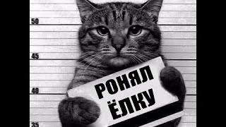 Самые смешные коты в мире! Лучшие приколы с котами 2016-2017 часть 5/ бешеные коты (CatsLIVE)