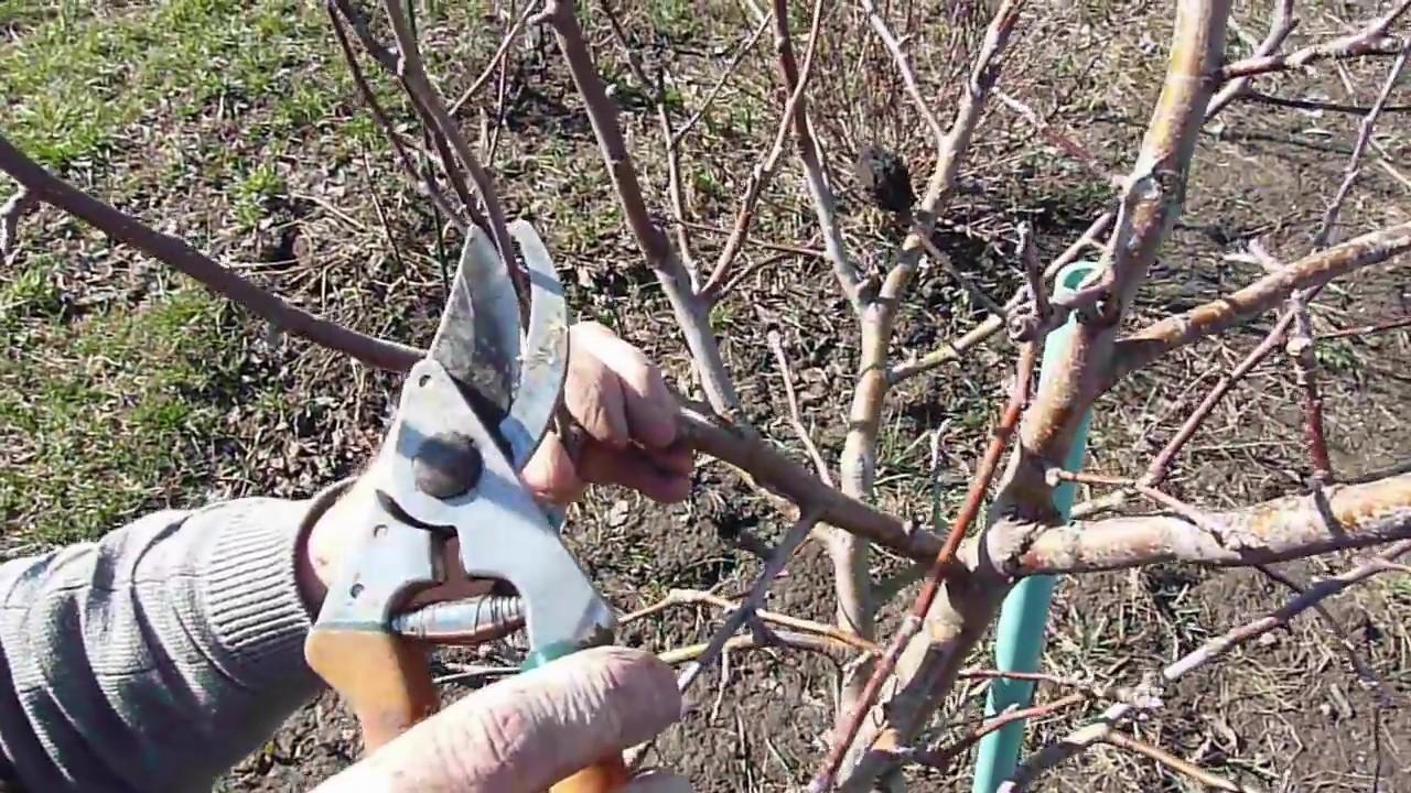 Curat pomi fructiferi