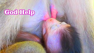 Awesome for baby VeVo, Cute baby monkey VeVo is suckling milk from mom, Gorgeous baby monkey | MP