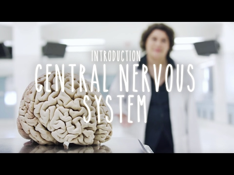 Introduction to the Central Nervous System - UBC Neuroanatomy Season 1 - Ep 1