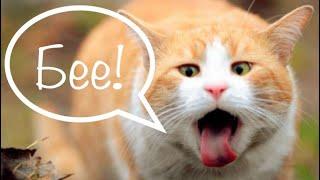 Почему кошку тошнит водой, слюной, белой пеной, после еды, от сухого корма?