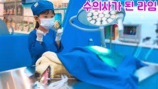 강아지 다리가 부러졌어요 수의사가 된 라임! 키자니아 어린이 직업체험을 하다!  Have a child doctor job experience.
