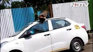 tree-falls-on-car-in-mumbai-s-aarey-amid-protest