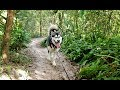 A Malamute & A Blonde Get Lost In The Woods!!!! Pt1