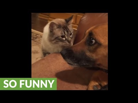 Cat puts dog in his place with death stare