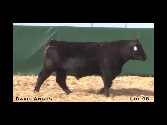 Davis Angus Lot 98