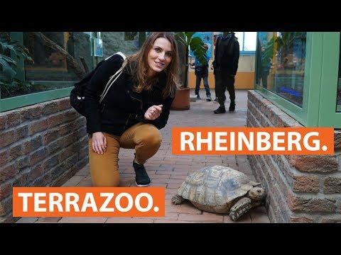 Der TerraZoo in Rheinberg: Schlangen, Schildkröten und andere Reptilien | checkpott