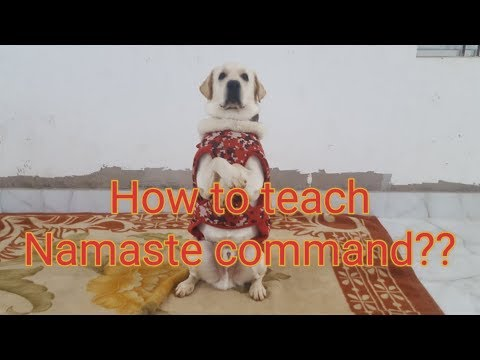 How to teach your dog 'Namaste' command