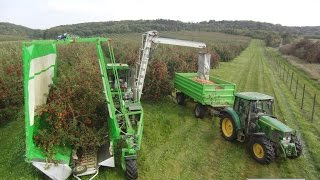 FRUMACO Shake and Catch Harvester / Cosechadora / Vollernter OE4 3