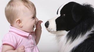 Собаки нянчаться с детьми. Смешные животные