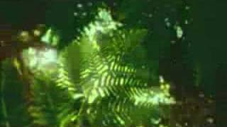 Rain Forest - Ambient New Age Reiki Music Video -By Equinox thumbnail