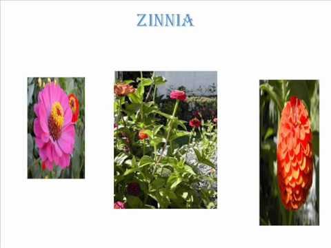 Plantas terrestres youtube for 20 plantas ornamentales